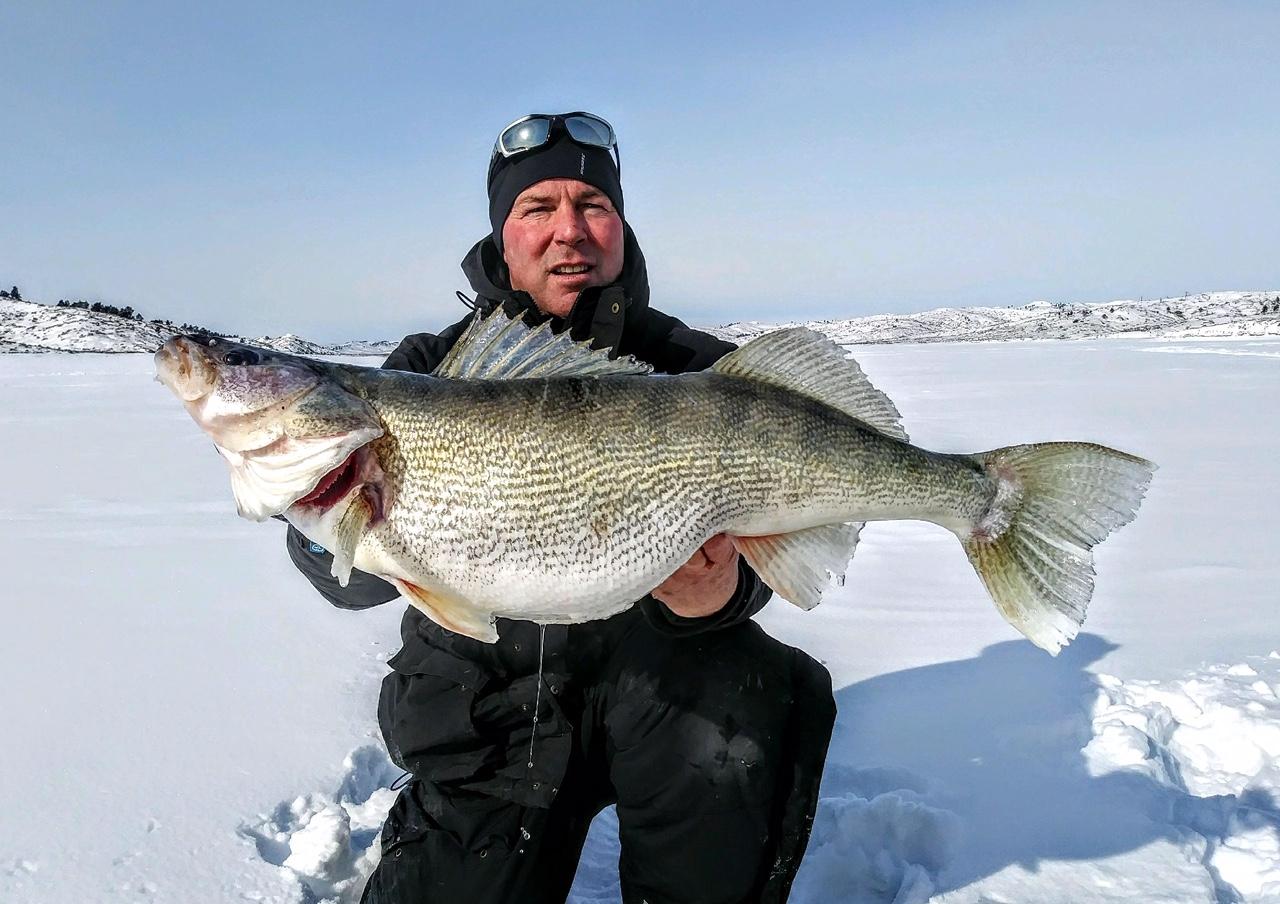 Duck Bay Marina >> HUGE Walleye!!! | Montana Hunting and Fishing