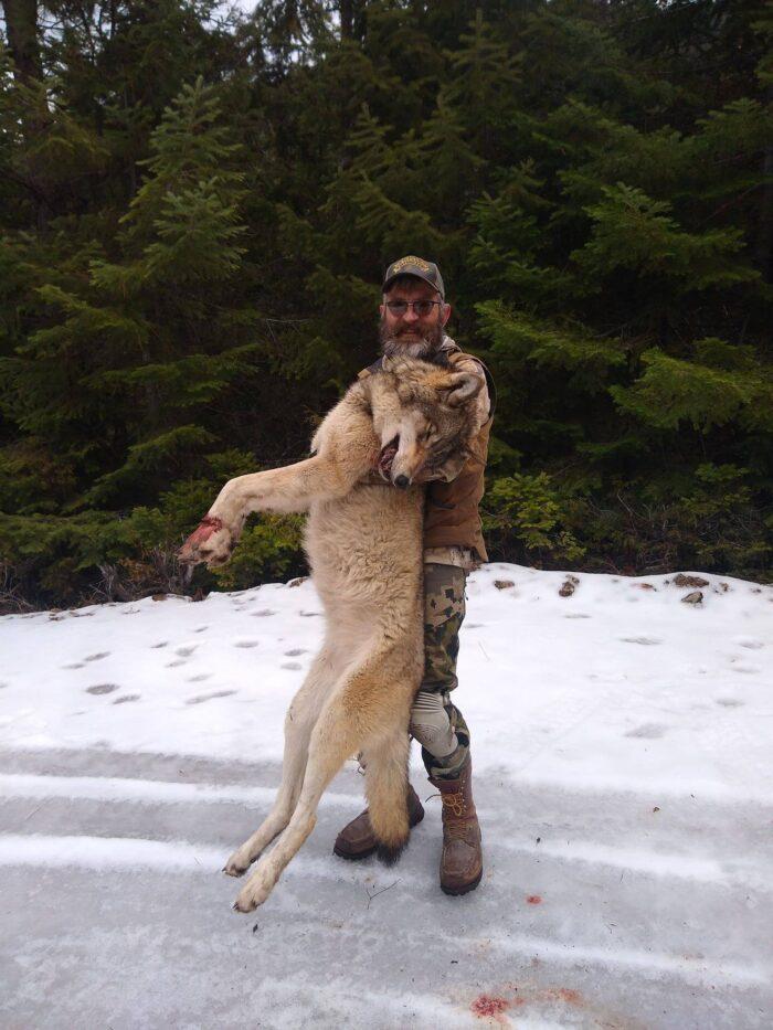 wolf management